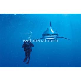 Clementoni 1000 Parça  Nat Geo Whitetip Shark Puzzle