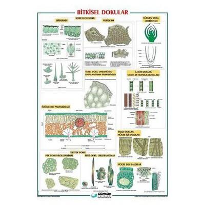 gurbuz-yayinlari-bitkisel-dokular-levhasi