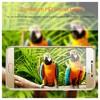 Microsonic Samsung Galaxy C5 Temperli Cam Ekran Koruyucu Film