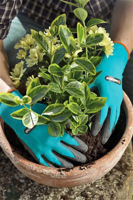 <strong>Dikim ve Toprak Eldiveni</strong><br/> GARDENA Dikim ve Toprak Eldiven daha zorlu görevler için özel koruma sağlar hatta nemli ortamlarda bile. Lateks malzeme ellerinizin temiz ve kuru kalmasını sağlar.Hassas kumaş seçimi ve elastik örgü malzemesi konfor ve nefes alabilme ve eli kavrama özelliklerine sahip. Bunun anlamı: Terli ellere Hayır! Boyut 8 / M.